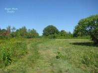 Field Restoration