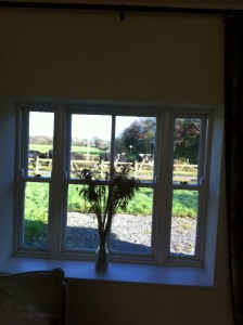Cows at the window