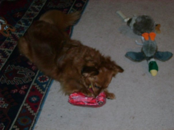 molly and christmas presents