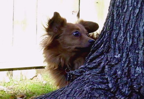 Molly Where is the squirrel
