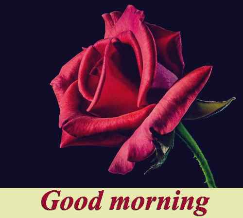 38 good morning hd