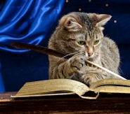 cat-writing-in-bos-image-small