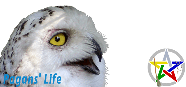 Pagans' Life Owl Moment