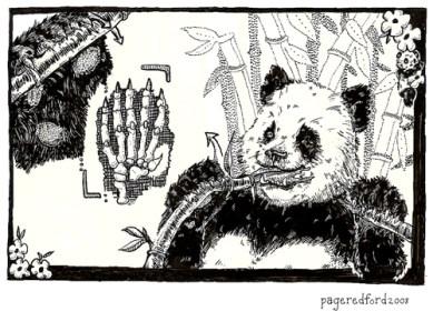 Panda Thumb