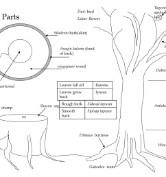 figure 2 1 tree parts and terms trees knots and outriggersfigure 2 1 tree parts and [ 3000 x 2250 Pixel ]