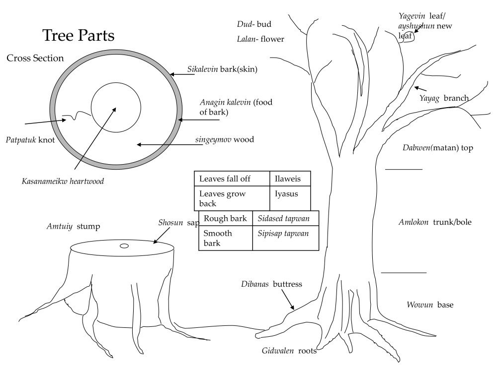 medium resolution of figure 2 1 tree parts and terms fundamental terms for trees and their parts a