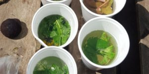 Spring Foraging in the UK - Nettle tea