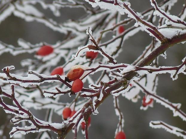 Jahreszeiten Bilder
