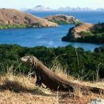 Berlibur ke Pulau Komodo, Pastikan Kamu Patuhi 5 Hal Ini!