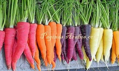 zanahorias_variedades