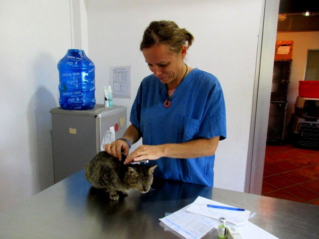 Pagoda Cats Siem Reap - Vet nurse Katie Russel
