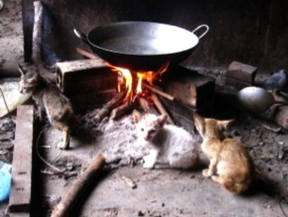 Pagoda Cats Siem Reap - Mission