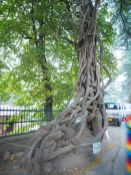International Roerich Memorial Trust