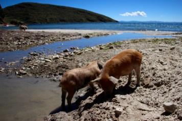 Lake Titicaca - 25