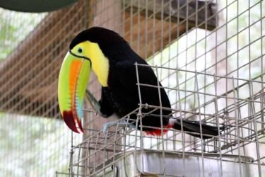 CopanBirdParkBlog - 1