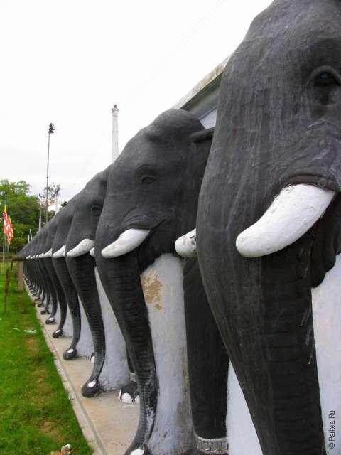 анурадхапура слоны