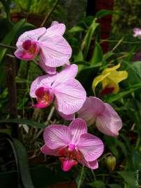 В ботаническом саду Шри-Ланки