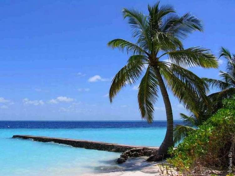 Пальма у берега