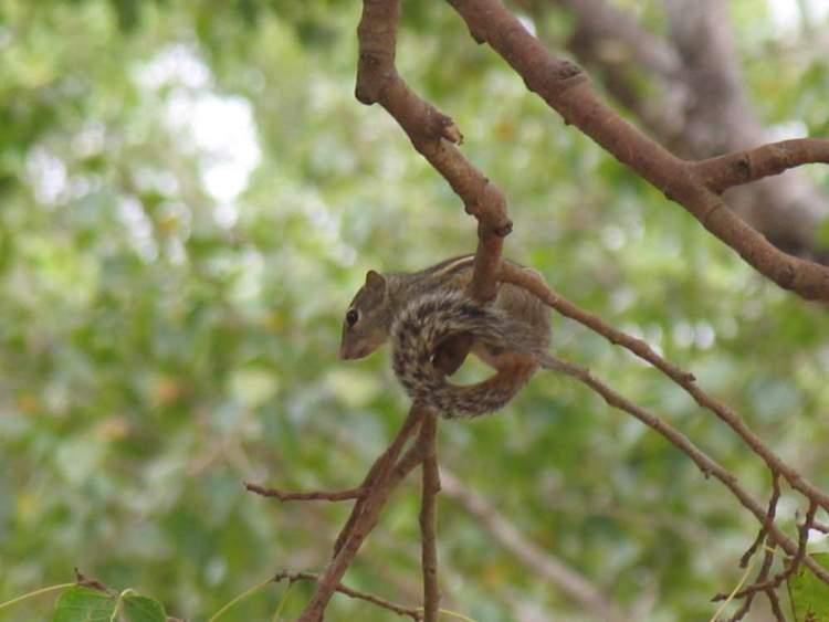 животные и растения шри ланки 05