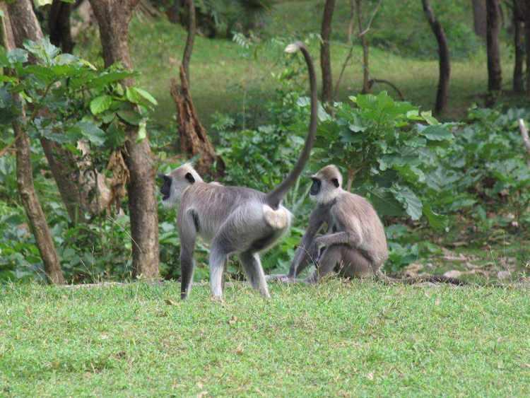 животные и растения шри ланки 16