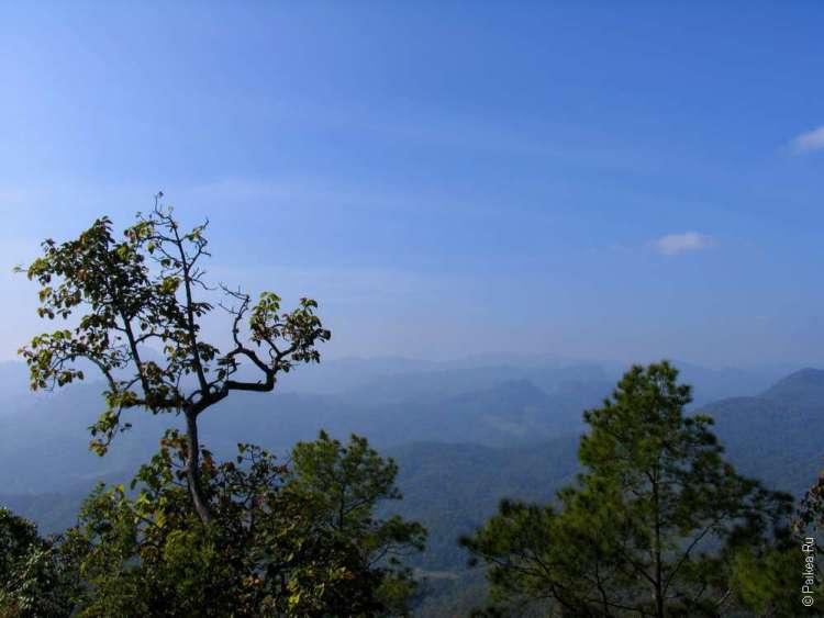 Сосновый пейзаж Тайланд
