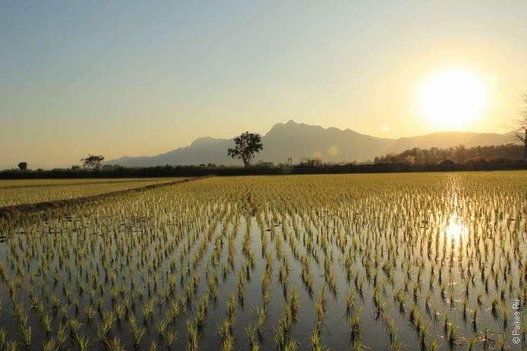 Северный Таиланд что посмотреть