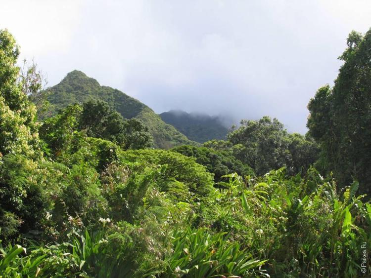 Оаху, Гавайи - вулканические горы покрыты зеленью