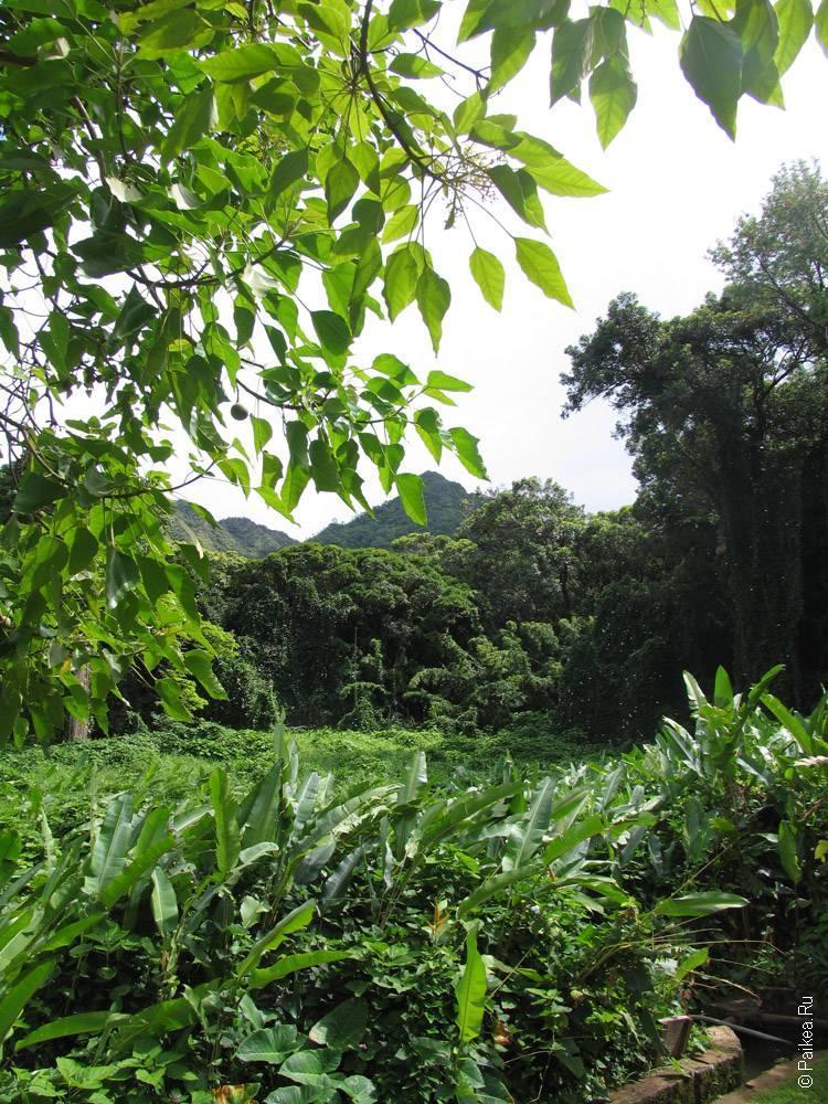 Оаху, Гавайи - трава и деревья вокруг