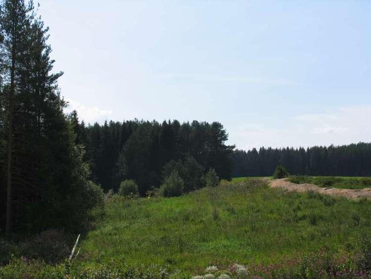 сыктывкар лес