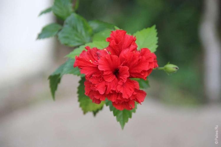Цветы и небо - есть еще более прекрасные вещи?