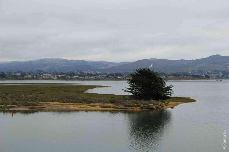 Дерево на острове