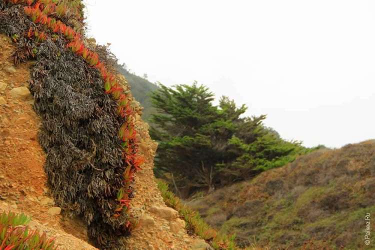 Растение на скале