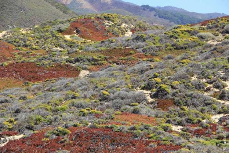 Цветные кусты на холмах западного побережья США