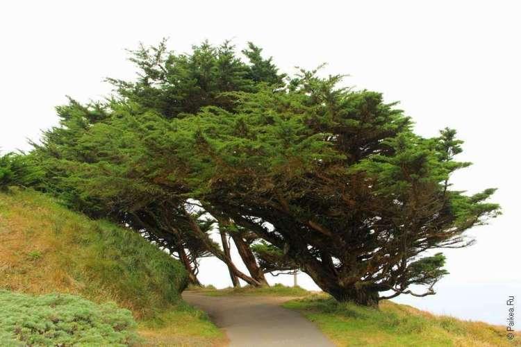 Дорожка под кронами деревьев