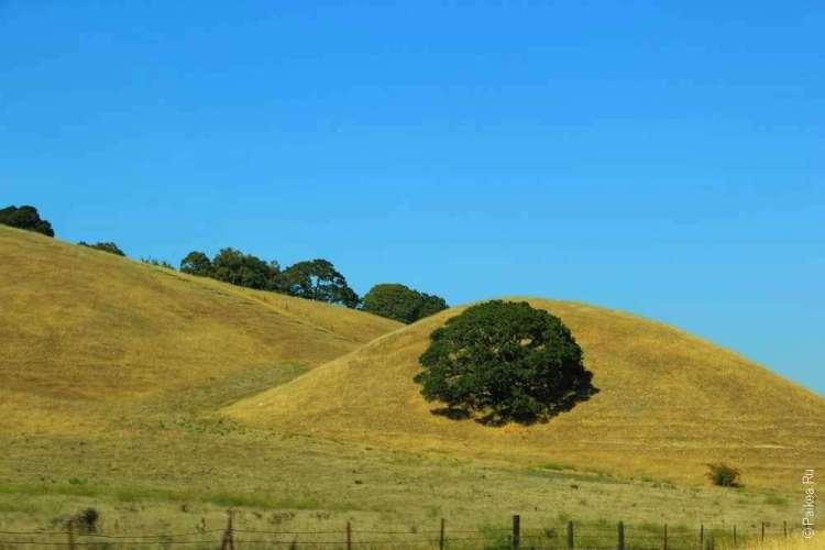 Зеленый куст на желтом холме