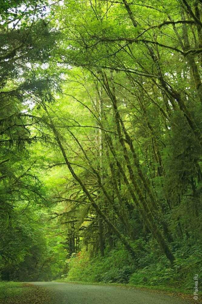 Высокие деревья вдоль дороги
