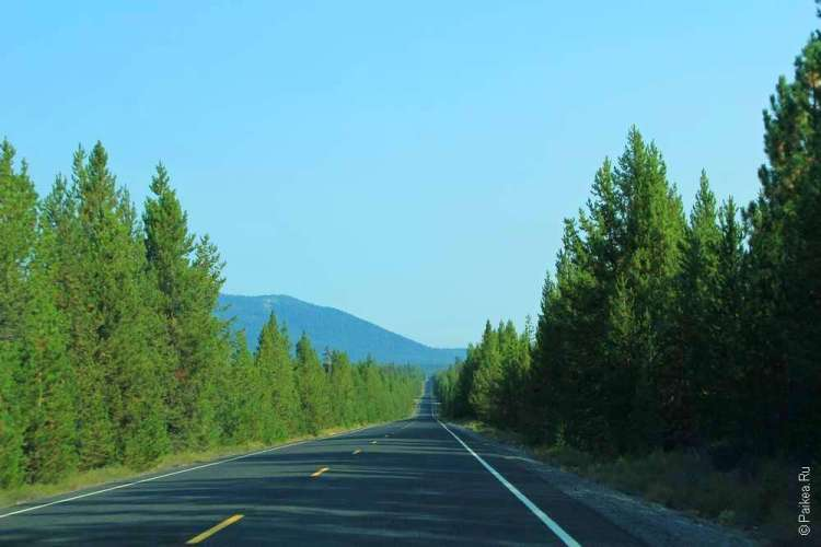 Живописная дорога в лесу