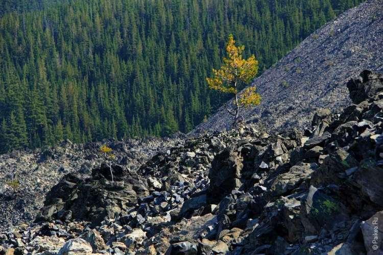 Одинокое дерево на горе из обсидиана