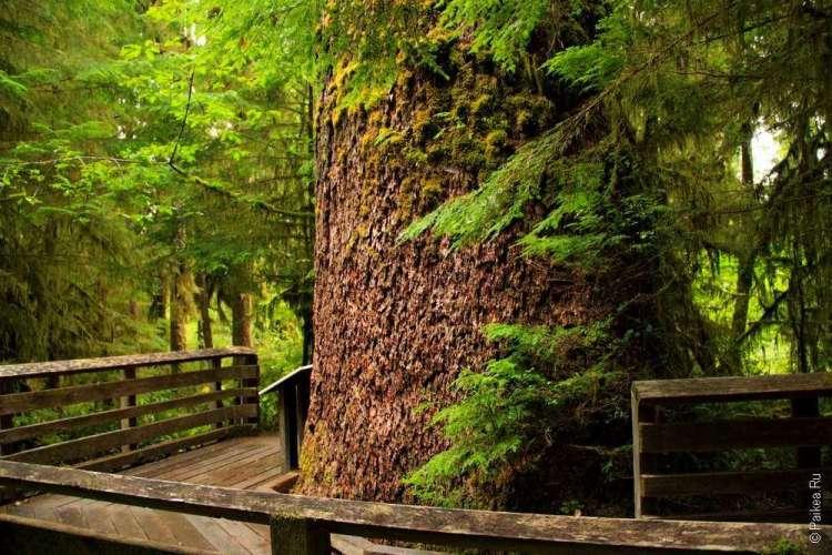 дождевой лес в национальном парке олимпик 02