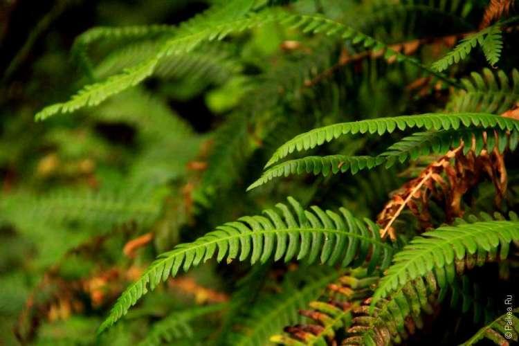 дождевой лес в национальном парке олимпик 07
