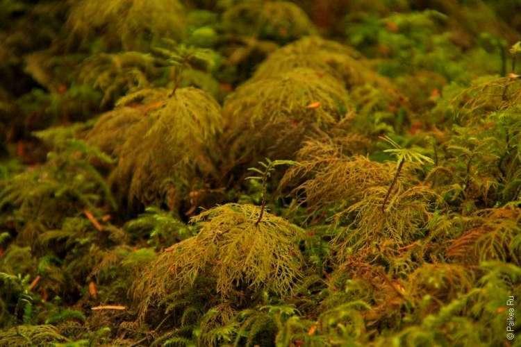 дождевой лес в национальном парке олимпик 09