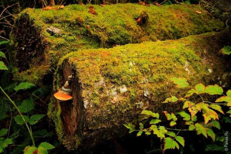 дождевой лес в национальном парке олимпик 17