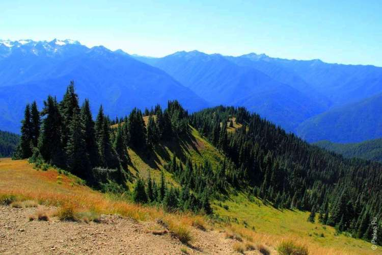 Лес на горных вершинах