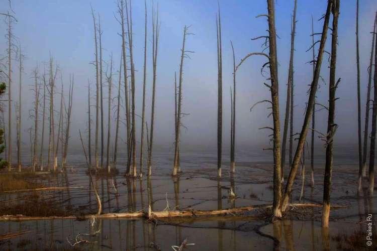 Деревья в термальном бассейне