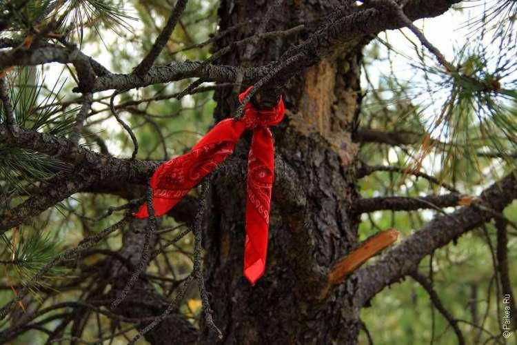 Красная ленточка на ветке дерева