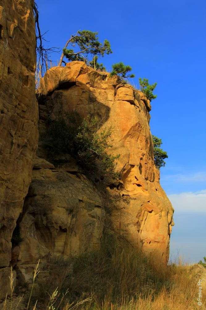 Сосна растет на скале