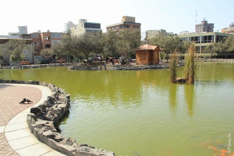 Оливковый сад, Сан-Исидро, Лима, Перу (Bosque el Olivar, San Isidro, Lima, Peru)