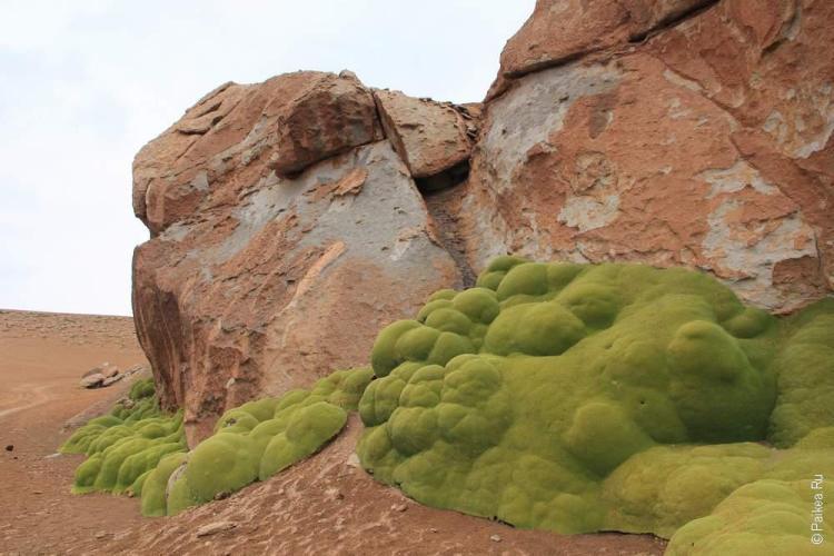 Боливия, Трава ест камни