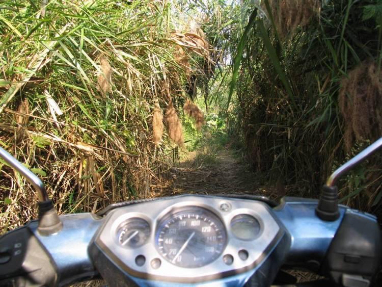 Порой приходилось пробиваться на байке через настоящие джунгли!