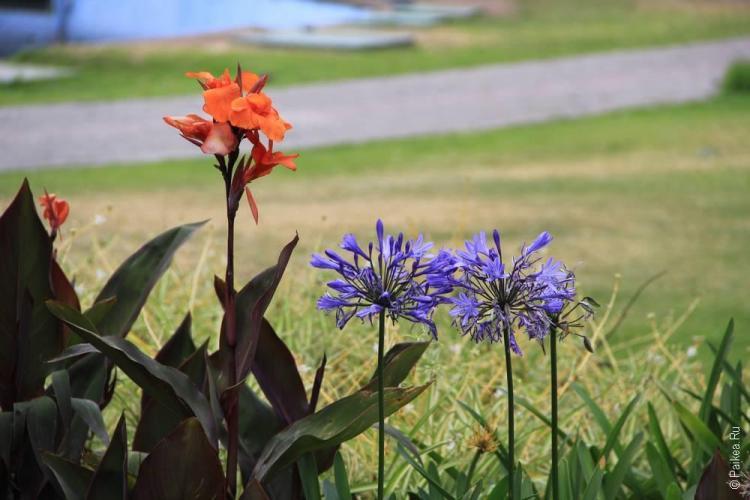 красивые цветы в парке Кито